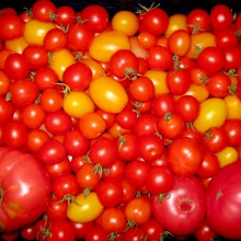 Tomatoes Azur 3.1
