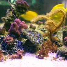 Azur 1.1 aquarium LED light + metalhalide daylight